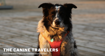 The Canine Travelers